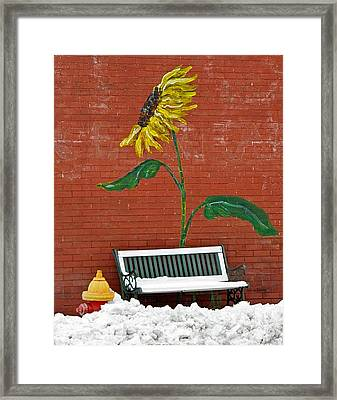 Sunflower And Snow Framed Print by Chris Berry