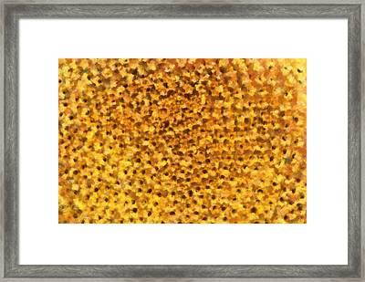 Sunflower Framed Print by Dan Sproul