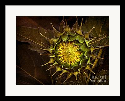 Agronomy Digital Art Framed Prints