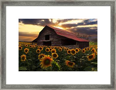 Sunflower Farm Framed Print