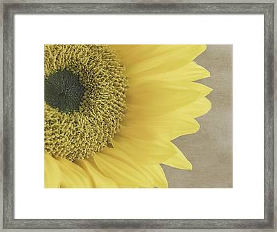 Sunflower  Framed Print by Kim Hojnacki
