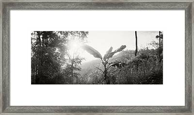 Sunlight Coming Through The Trees Framed Print
