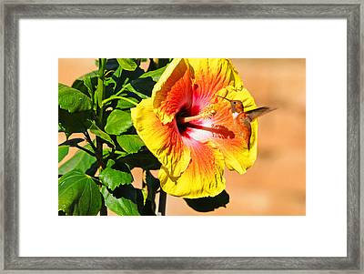 Sunny And Bright Framed Print by Lynn Bauer