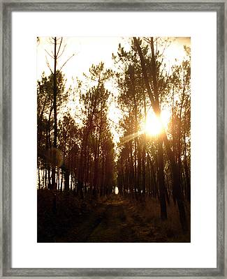 Sunrise Pin Tree Forest Framed Print by Michel Mata