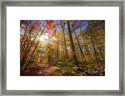 Sunshine In Fall Forest Framed Print