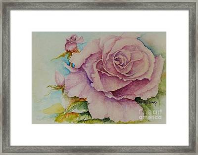 Susan's Rose Framed Print