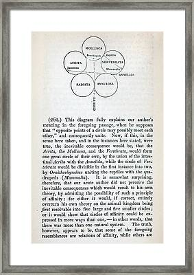 Swainson's Quinary Taxonomy Framed Print