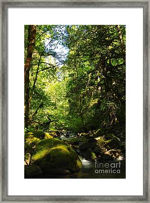 Sweet Day Framed Print by Tim Rice