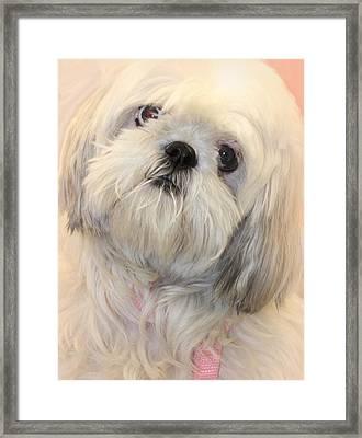 Sweet Love Framed Print by The Art Of Marilyn Ridoutt-Greene