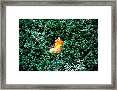 Framed Print featuring the photograph Sweet Slumber by Deena Stoddard
