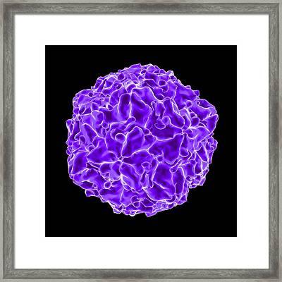Swine Vesicular Virus Framed Print by Mehau Kulyk