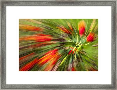Swirl Of Red Framed Print
