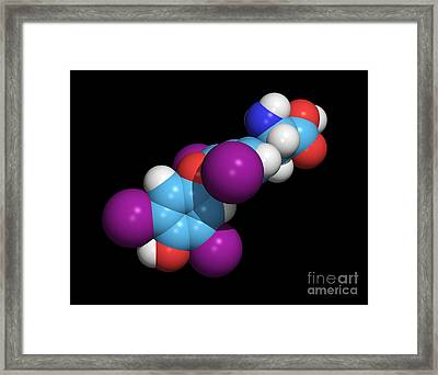 Synthetic Thyroid Hormone Molecule Framed Print by Dr. Tim Evans