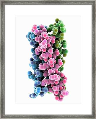 Synthetic Triple Helical Peptide Molecule Framed Print