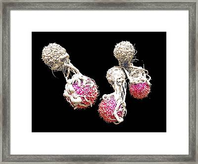 T Cells Attacking Cancer Cells Framed Print
