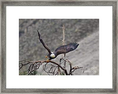 Take-off Framed Print by Mike Dawson