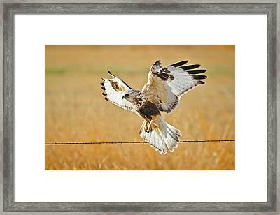 Taking Flight Framed Print by Greg Norrell
