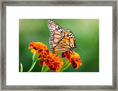 Taking Off Framed Print by Lee Costa