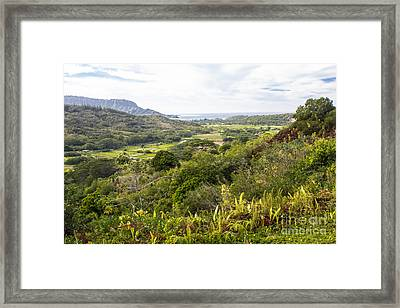 Framed Print featuring the photograph Taro Fields by Suzanne Luft