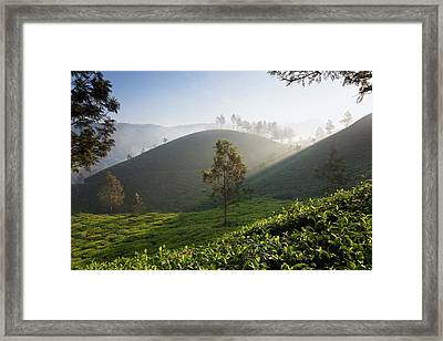 Tea Plantations, Munnar, Western Ghats Framed Print by Peter Adams