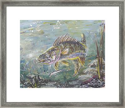 Tempted Walleye Framed Print by Gerald Rader