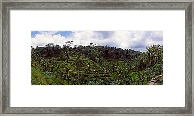 Terraced Rice Field, Flores Island Framed Print by Panoramic Images