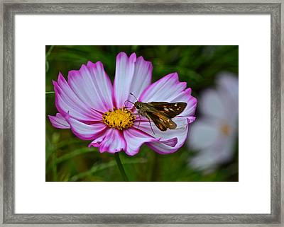The Beauty Of Nature Framed Print by Frozen in Time Fine Art Photography