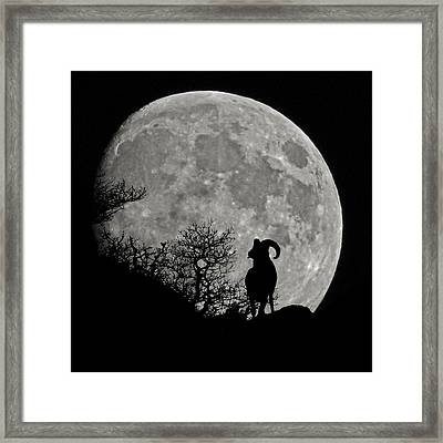 The Big Horn Framed Print