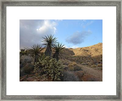 The Living Desert Framed Print