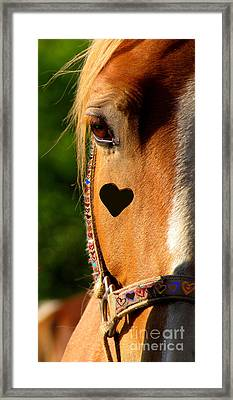 Framed Print featuring the photograph The Love Of A Horse by France Laliberte