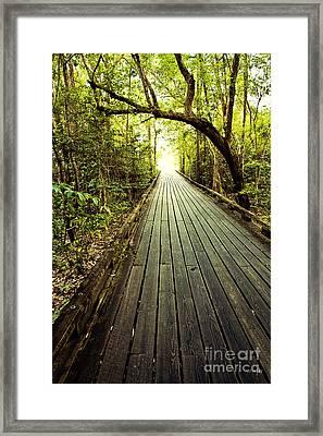 The Path Framed Print by Scott Pellegrin