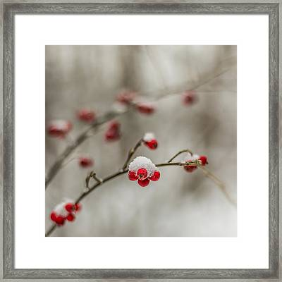 The Season Of Love Framed Print