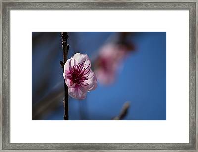 The Spring Is Coming Framed Print
