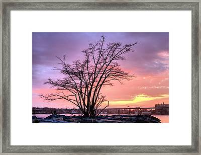 The Tree Framed Print by JC Findley