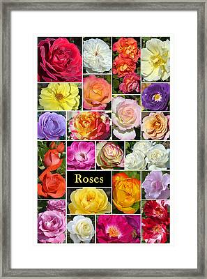 Framed Print featuring the photograph The Wonderful World Of Roses by Cindy McDaniel