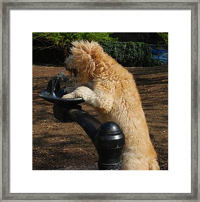 Thirsty Dog Framed Print