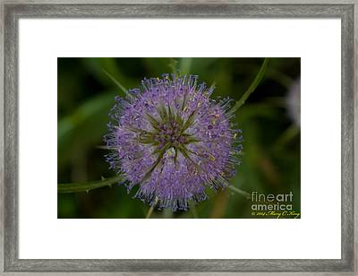 Thistle Pop Framed Print by Mary  King