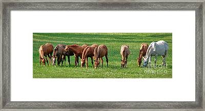Thoroughbreds Framed Print by Olivier Le Queinec