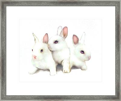 Three Bunnies Framed Print
