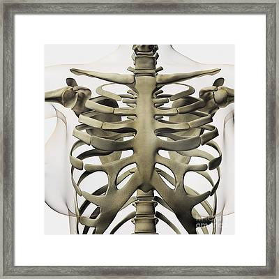 Three Dimensional View Of Female Framed Print by Stocktrek Images