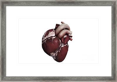 Three Dimensional View Of Human Heart Framed Print