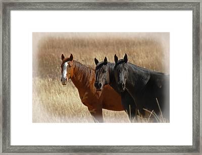 Three Horses Framed Print by Ernie Echols