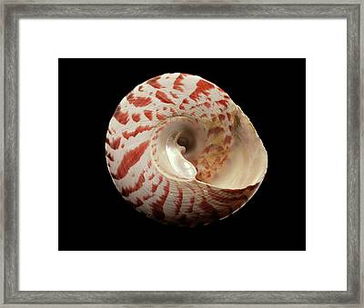 Top Snail Shell Framed Print by Gilles Mermet
