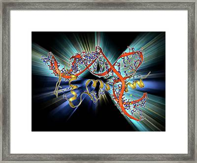 Transcription Factor And Ribosomal Rna Framed Print by Laguna Design