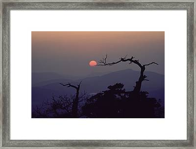 Tree And Sun From Mt Scott Framed Print