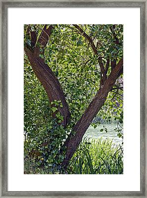 Framed Print featuring the photograph Tree At Stow Lake by Kate Brown