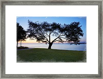 Tree By The Bay Framed Print by Kelley King
