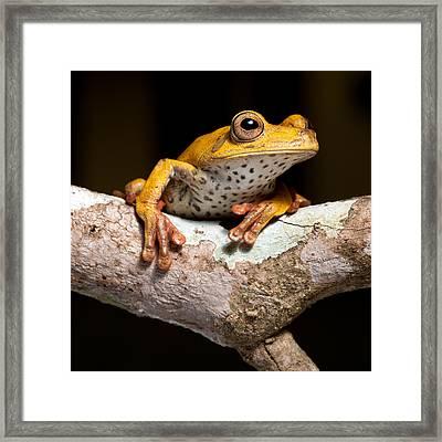 Tree Frog On Twig In Rainforest Framed Print