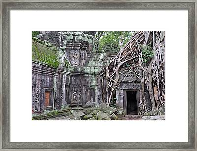 Tree Roots On Ruins At Angkor Wat Framed Print by Sami Sarkis