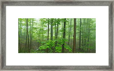 Trees In A Forest, Hamburg, New York Framed Print
